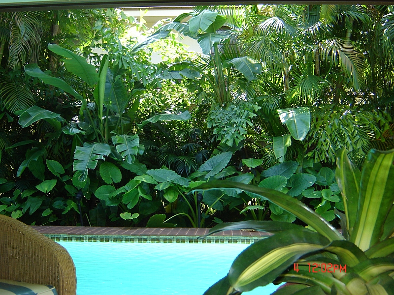 Tropical landscaping ideas on pinterest tropical for Garden designs around pools